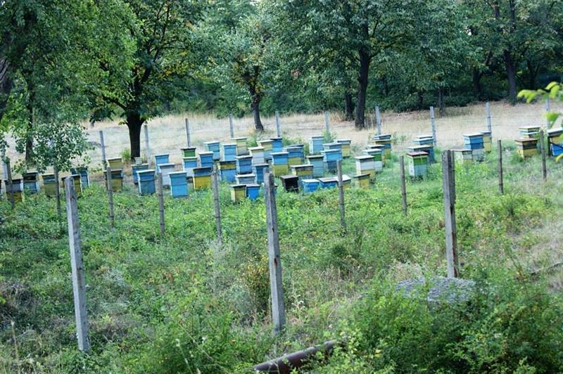 """Да отглеждаш пчели в """"родното място"""" на куртовската капия"""